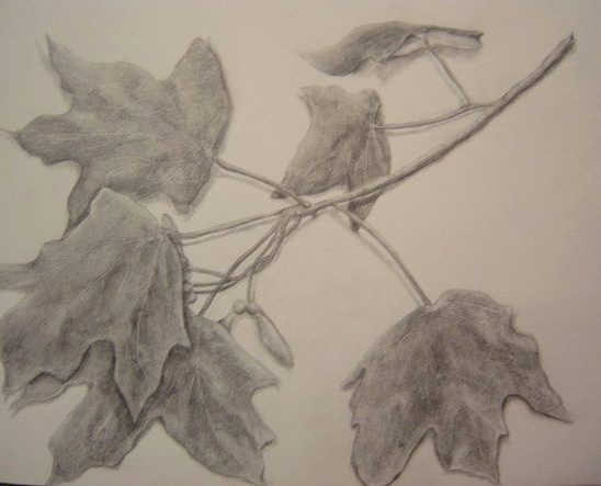 Branch of Leaves
